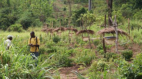 Beehive fences in Tanzania