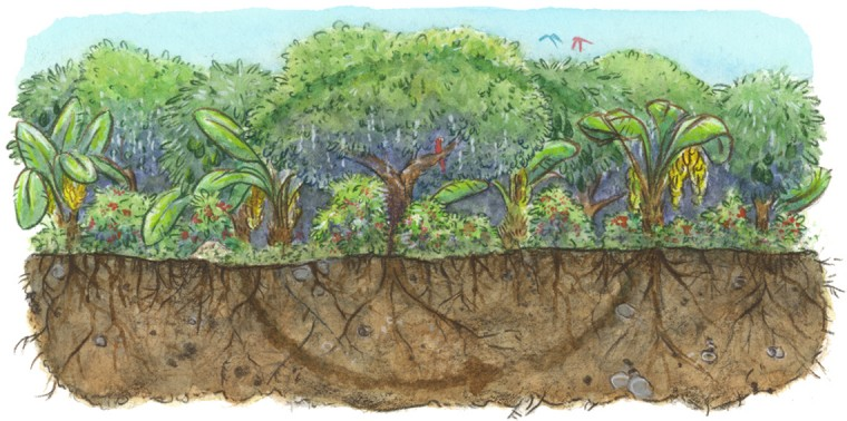 Carbon farming with mixed crops of avocados, macadamias, bananas and coffee