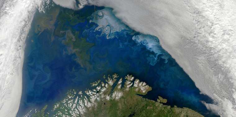 Phytoplankton blooms in the Barents Sea