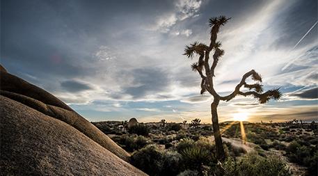 Joshua Tree National Park - California, United States