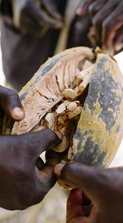 Inside Baobab Fruit