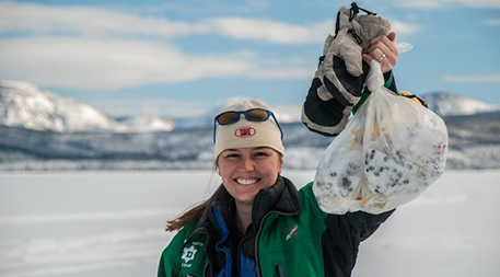 Photo of Jean Polfus very excited about a bag of caribou scat