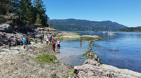 Clam garden restoration on Russell Island in the Southern Gulf Islands