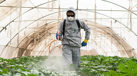 Spraying pesticides in Egypt