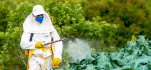 Spraying pesticides in Brazil