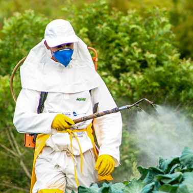 The developing world is awash in pesticides. Does it have to be?
