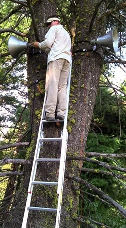 Jesse Barber hanging speakers in tree