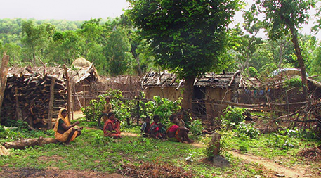 Baiga homes within the forest