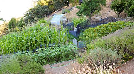 Common Ground mini-farm
