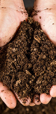 What is it about this soil that protects plants from devastating disease?