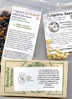 The Open Source Seed Initiative, where U.S. breeders take a pledge committing their seeds to remain available for others to use for breeding in the future, is in contrast to the practice of patenting seeds and crop traits. Photo by Jack Kloppenburg