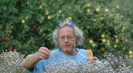 Independent plant breeder Frank Morton selects lettuce seed in his breeding nursery. Photo by Karen Morton