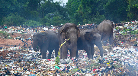 Well-intentioned efforts to clean up waste dumps are having unintended consequences for animal scavengers. Photo © iStockphoto.com/rudiuks