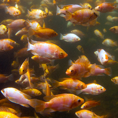 This contest aims to reduce the toll of aquaculture on wild fish populations
