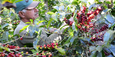 Watch: How a Costa Rican cooperative slashed the carbon footprint of coffee