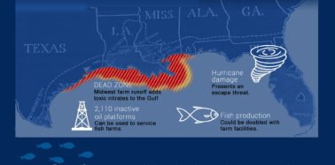 Farming the open ocean in the U.S.: Is the Gulf of Mexico the right place to start?