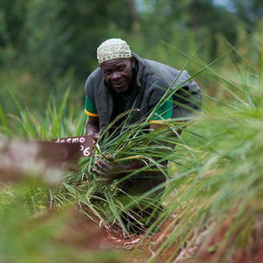 How some African farmers are responding to climate change — and what we can learn from them