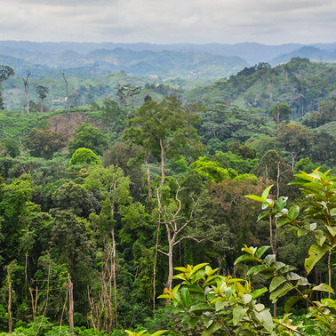 Deep in the jungle, scientists explore the links between the Congo and climate change