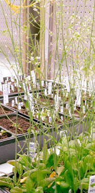 Plants are great at storing CO2. These scientists aim to make them even better.