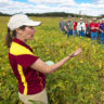 Small strips of prairie hold big hope for helping cure a multitude of environmental ills