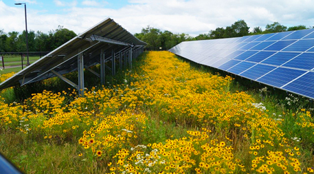 flowering plants with solar panels