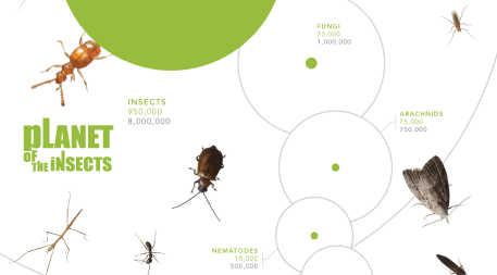 infographic about the planet's biodiversity