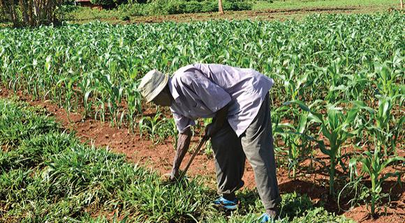 pest and soil management