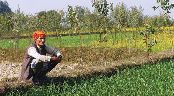 sustainable intensification in Nepal