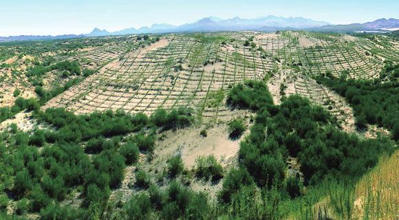 China reforestation, Grain-for-Green program, tree planting