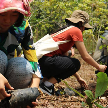 Learning from the past: Japan's tree-planting efforts provide lessons for other countries