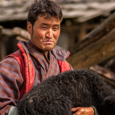 From the Himalayas to the Arctic, traditional herders are sharing knowledge to cope with a changing climate