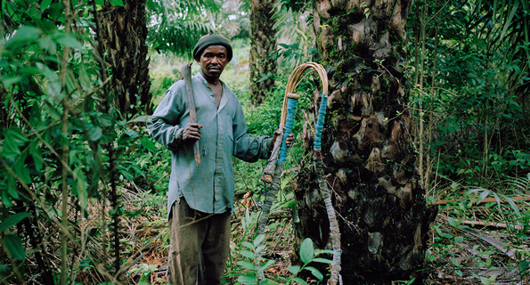 palm oil farmer in Sierra Leone