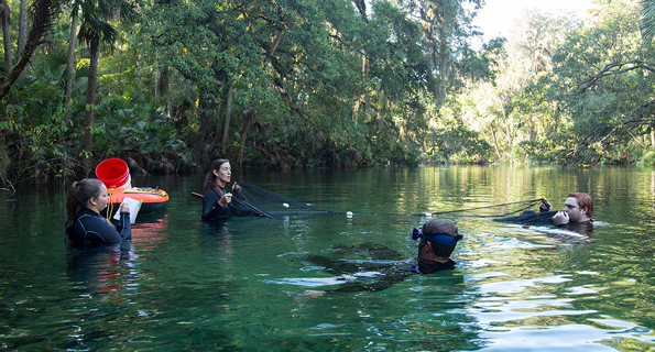 Stetson Univeristy's Kirsten Work and colleagues studying invasive fish at Florida's Blue Spring State Park
