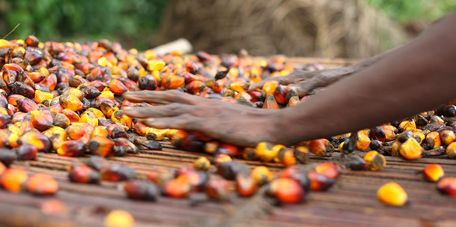 Image result for Palm Oil and Its Different Purposes