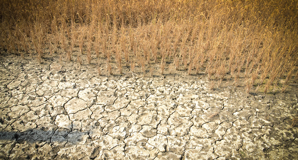 salt in soil affects crops in India