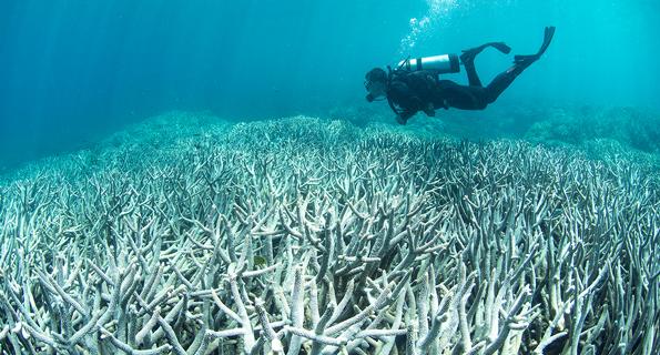 Coral bleaching at Heron Island