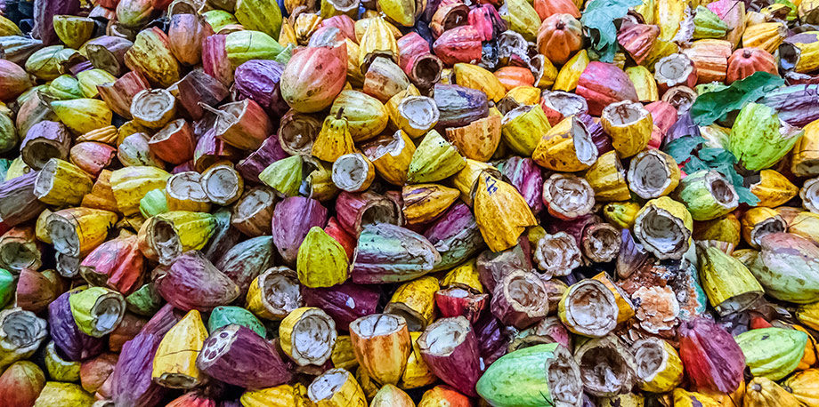 Photo of empty cacao pods