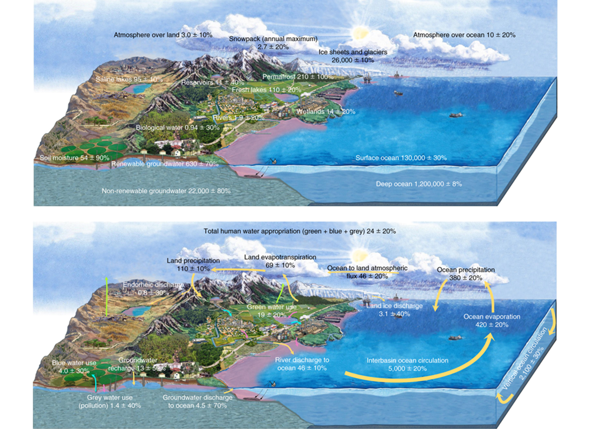 water cycle with humans