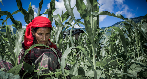 Himachal Pradesh, India, farmer