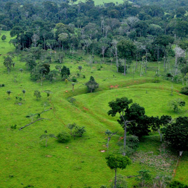 Ancient Amazonian societies managed the forest intensively but sustainably — here's what we can learn from them