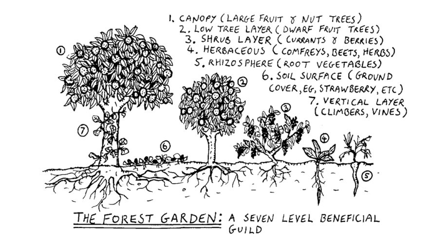 seven layers of a food forest