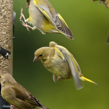 To feed or not to feed? The dilemma of interacting with birds and other wildlife