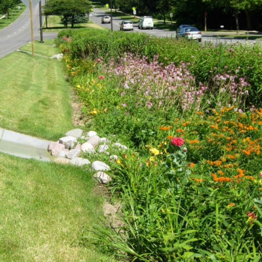 As cities' interest in green infrastructure grows, so does the need to develop strategies and resources to maintain it