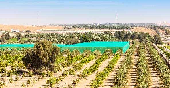 Abu Dhabi date farm