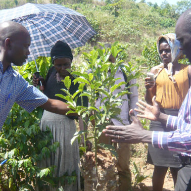 "In semi-arid Africa, farmers are transforming the ""underground forest"" into life-giving trees"