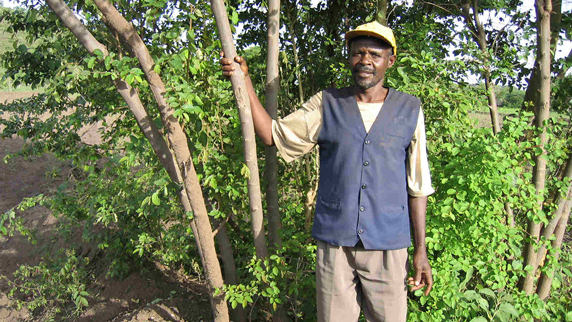 farmer-managed natural regeneration