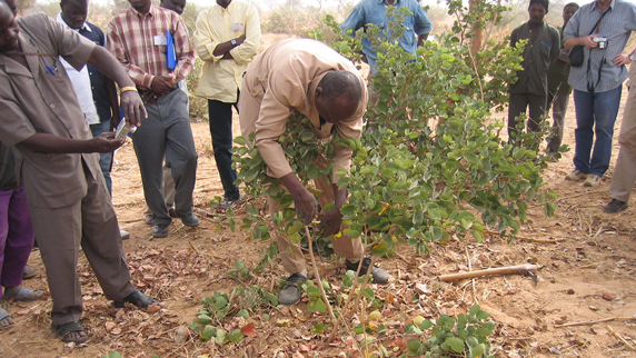 extension agent demonstrating farmer-managed natural regeneration