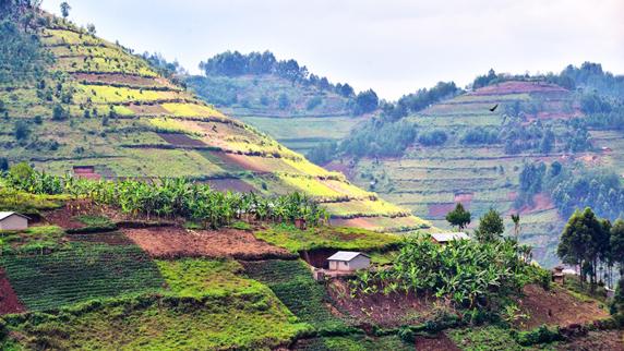 Farmland in Uganda