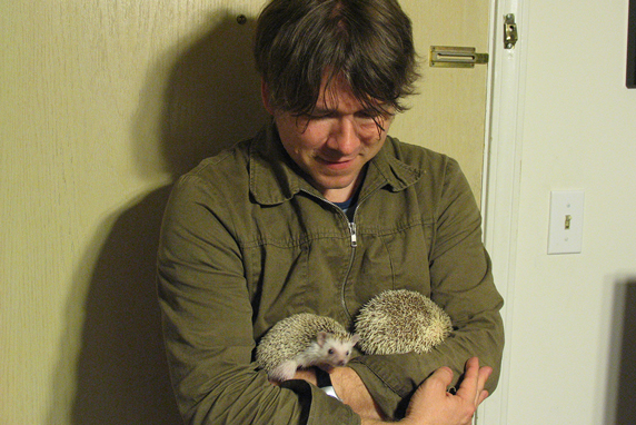 pet pygmy hedgehogs