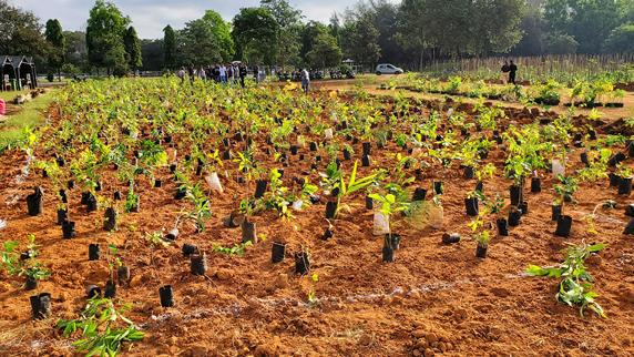 Miyawaki forest planting
